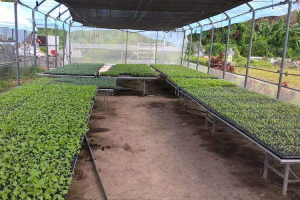 The rebuilding of Dominica's food production sector has been given a boost by the Inter-American Institute for Cooperation on Agriculture (IICA) and the OECS Commission's Agricultural Unit.